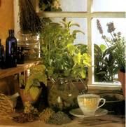 Монастырский сбор (чай) от гипертонии - сила лекарственных растений